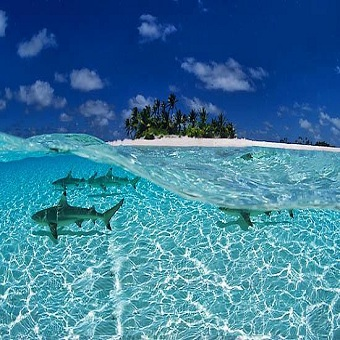 Mesmerizing maldives